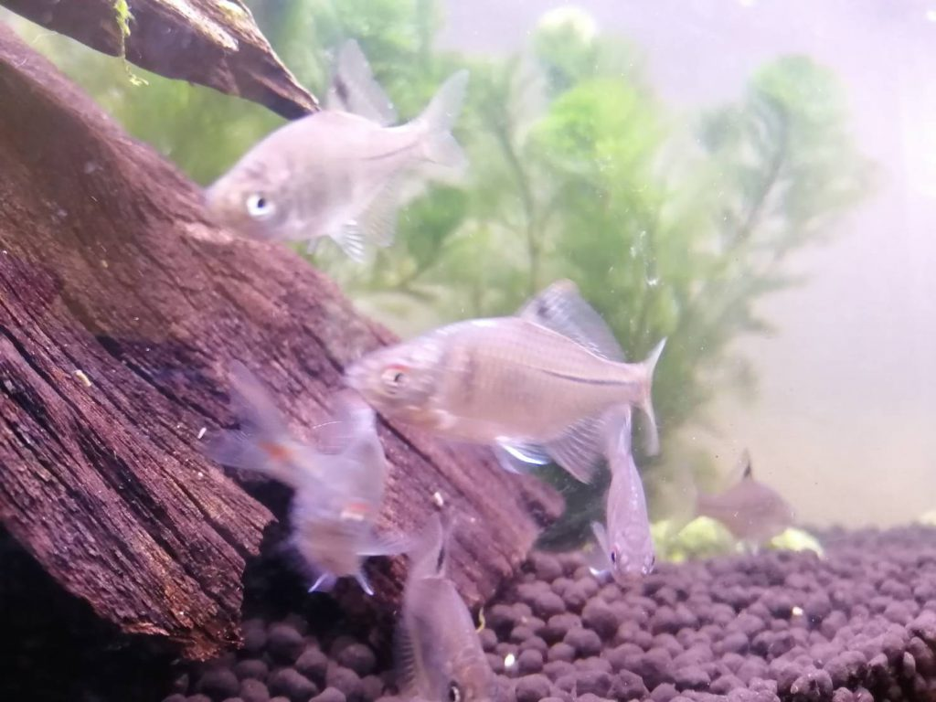 八卦から魚の数を決める理論もありますが、正しく魚を飼っていると繁殖したりしますので私はあまり気にしません。それよりも自然の摂理を作り出すという意味で水の循環が大切です。